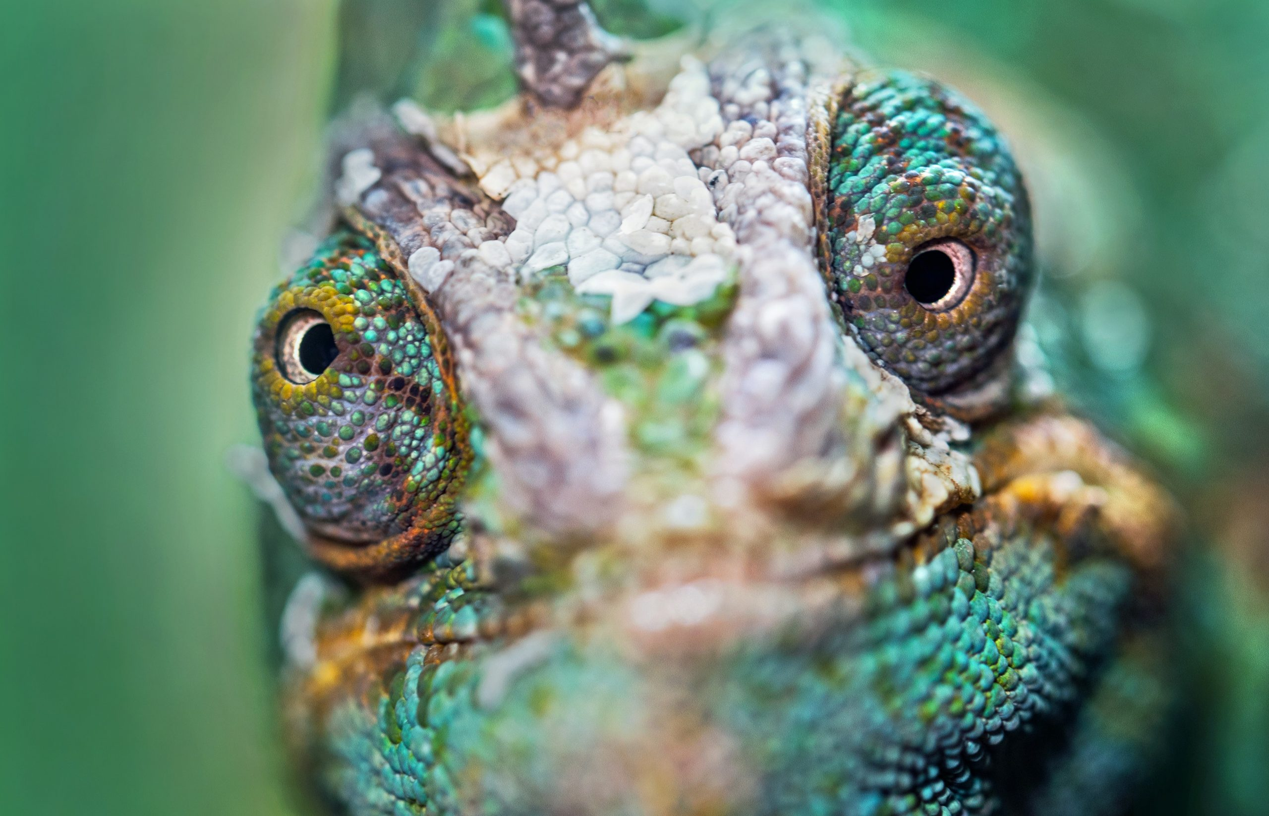 sometimes it feels like you need a chameleon's eyes to find the right keywords